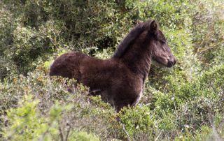 giara park foal