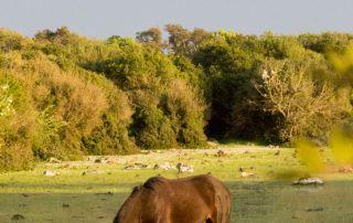 giara horse sunset