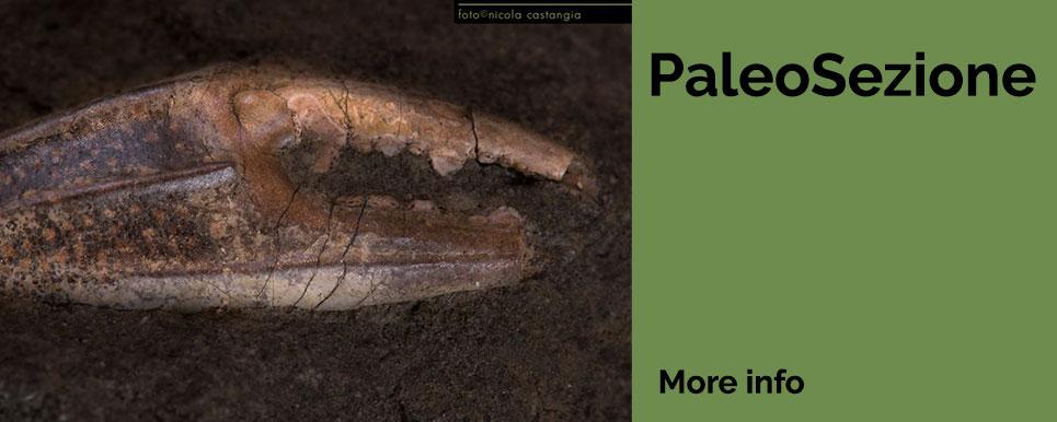 Sezione paleontologica PARC Genoni