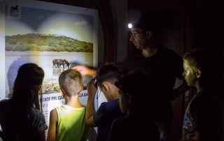 Visita guidata notturna al museo