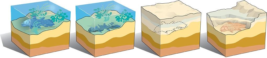 Processo di fossilizzazione
