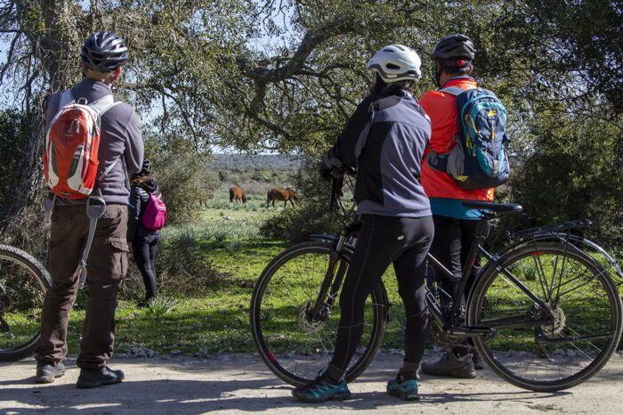Bike tour del Giara - Pausa per ammirare i cavallini